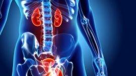 Мужские болезни мочеполовой системы: симптомы, диагностика и лечение