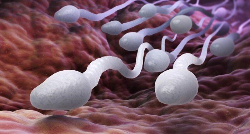 Сперматозоиды во влагалище