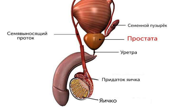 Анализ крови на аденому простаты