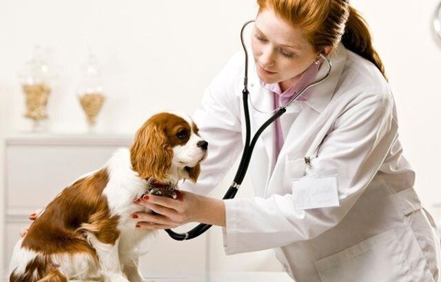 Амоксициллин в ветеринарии